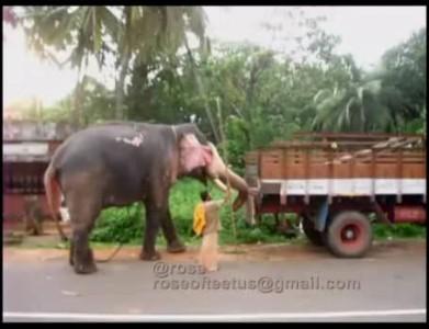 По городу слона возили