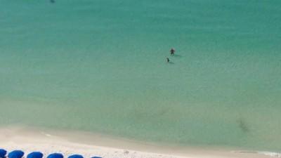 Акула на пляже