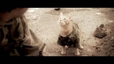 Геройский кот - медаль за отвагу