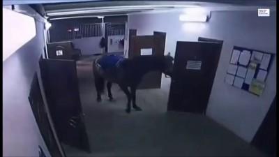 Лошадь с дверью