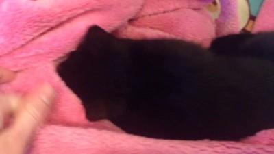 Кот и халат