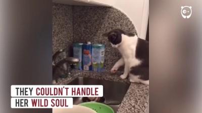 Что вытворяет кот, от которого отказались пять хозяев