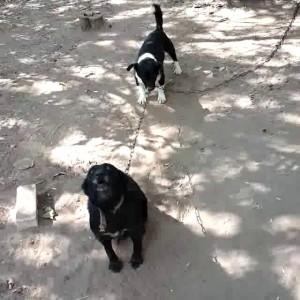 Собака за цепь держака