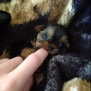 Маленькая собачья милота