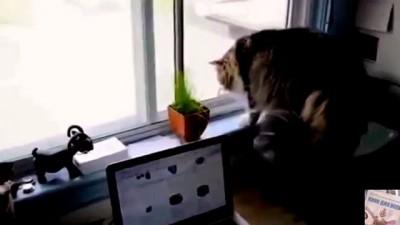 Эмоциональная разборка котов через окно