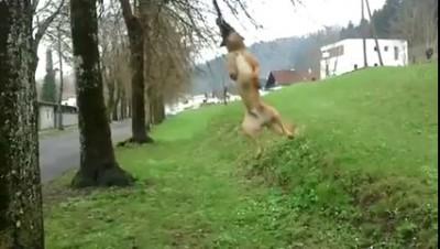 Собака - на палке катака