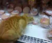 Кот трескает колбасу прям с прилавка