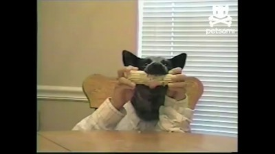 Собака с руками