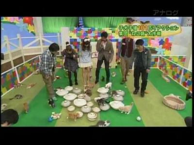 Японское кото-шоу