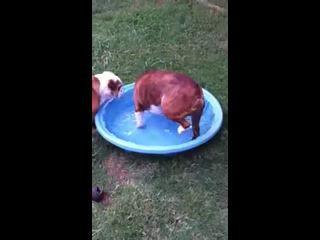 Упоротый пес
