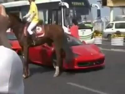 Эта лошадь  не любит Ferrari .