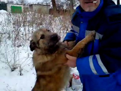 Мужик кормит собаку