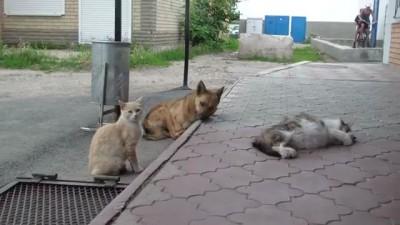 Шарик с друзьями