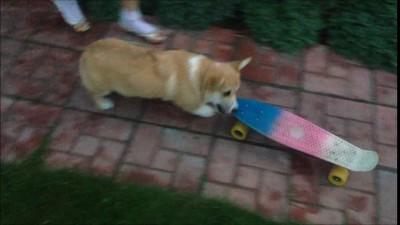 коржик на скейте