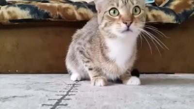 Кот смотрит фильм ужасов