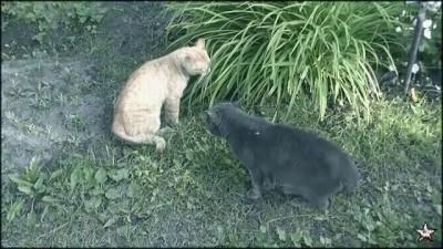 Драка котов [Cat Fight]