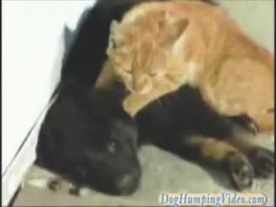 Тайский массаж кота для собаки