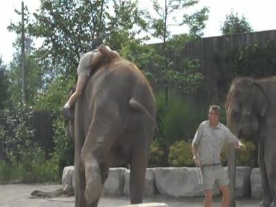 Никак не получается сесть на слона