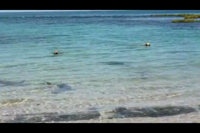 Собаки нападают на акулу
