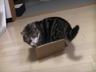 Маловата коробочка!