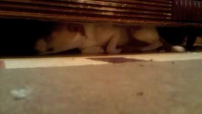Спасение собаки застрявшей под диваном другой собакой