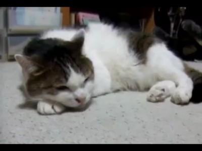 Кот поёт блюз