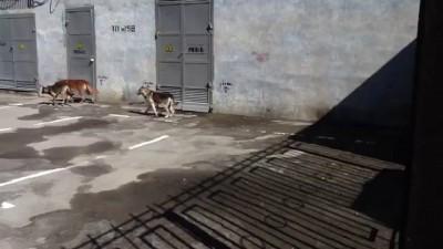 ЭлектроШОКЕР и собаки.