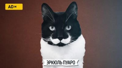Кошки, похожие на знаменитости
