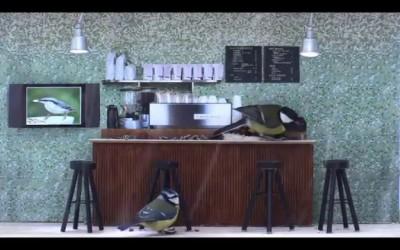 Кафе с птицами