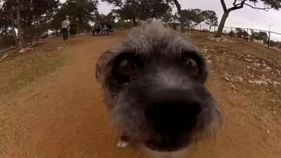 GoPro Dog Faces