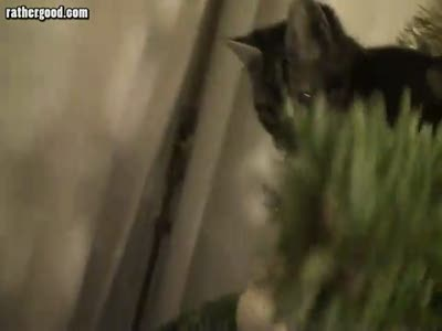 Кот и ёлка