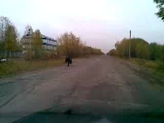 Медведь бежит по дороге