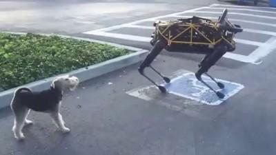 Собаке не понравился робот