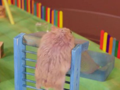 Two Tiny Hamsters in a Tiny Playground