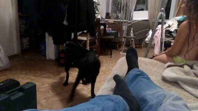 Собака Ада (наш хэлхаунд)