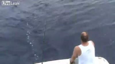 Акулы съели улов