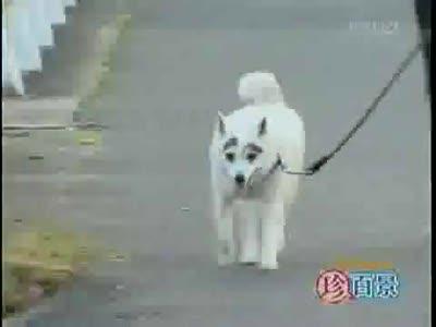 пёс по кличке Бровеноскин