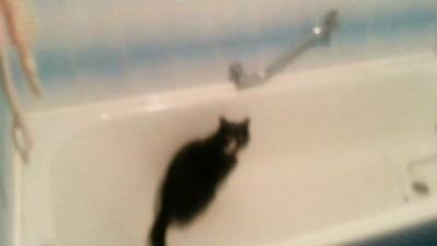 Насрал в ванне