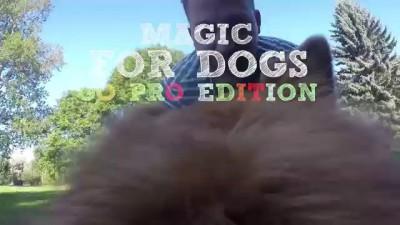 Фокусы для собак