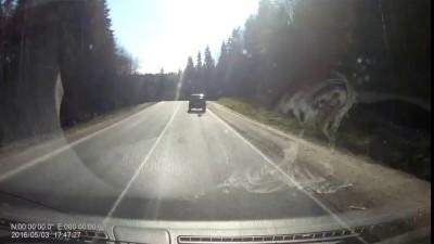 В Ленобласти живодёр тащил по трассе привязанную к машине собаку