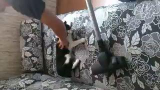 Химчистим кота
