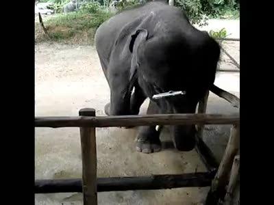 Кто придумал блюз? Слон.