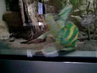 Дружелюбный хамелеон (продолжение)
