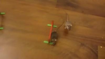 Повелитель мышей