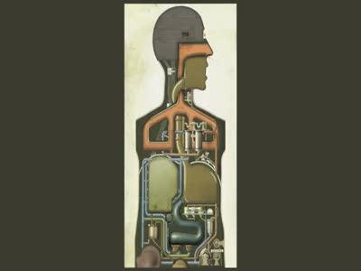 Анатомия для технарей
