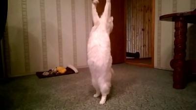 Jump-Jah-Cat