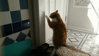 Максик роет дверь