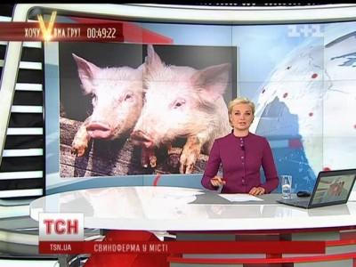 днепр свиноферма