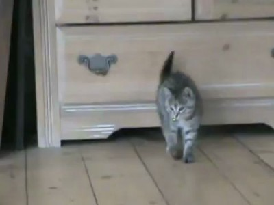 Funny Kitten Jump - Попрыгунчик