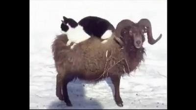 Кот-наездник